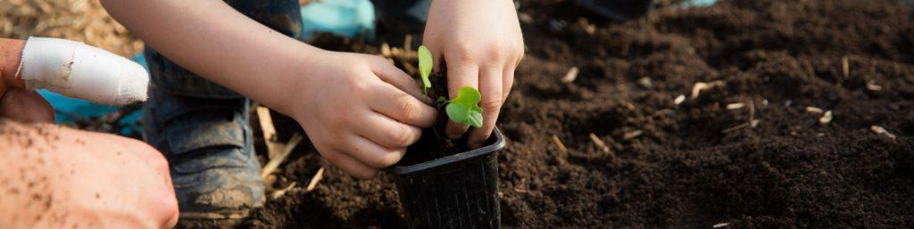 Préparation des jeunes plants au jardin pédagogie de l'ecole Brana