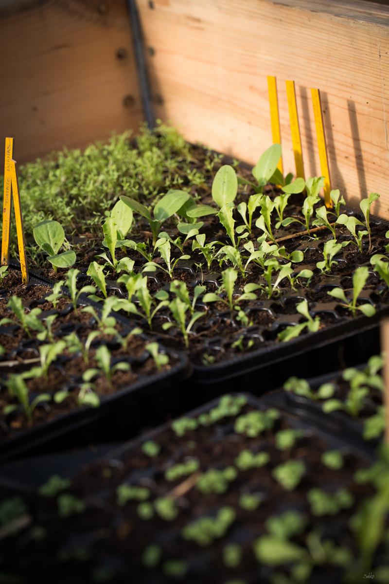 Commandes et trocs de plantes graines de libert for Commande de plantes